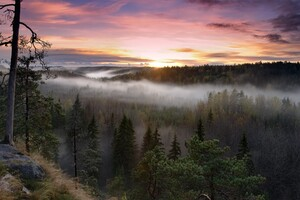 Foggy Sunrise National Park Wallpaper