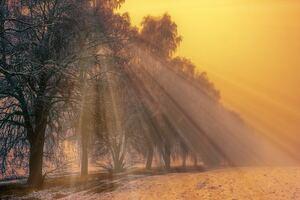 Foggy Trees Winter