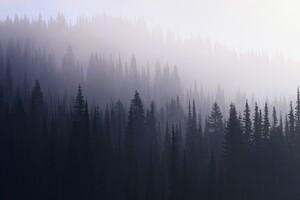 Forest Mist Wallpaper