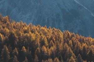 Forest Mountains Trees Tops Coniferous 4k Wallpaper