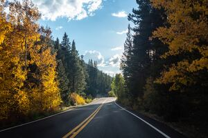 Forest Road Asphalt Landscape 5k Wallpaper