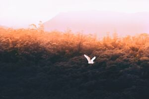 Forest Sould Bird Flying 5k Wallpaper