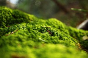 Forest Springtime