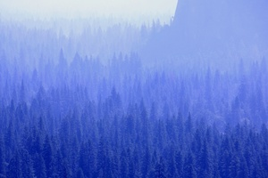 Forest Trees Blue Tone 5k Wallpaper