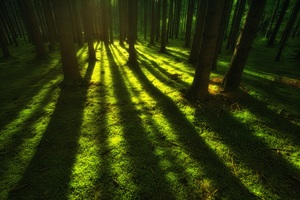 Forest Trees Sunbeam Wallpaper