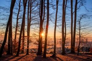Forest Trees Winter Landscape