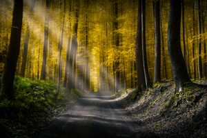 Forests Roads Rays Of Light 5k