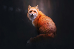 Fox Digital Art 4k