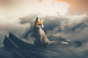 Fox The Observer