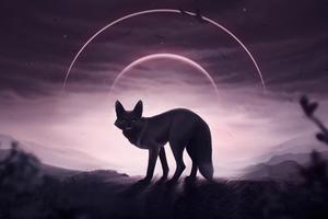 Fox Wolf 5k