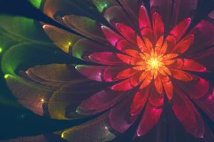 Fractal Flower 4k Wallpaper