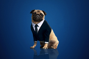 Frank The Pug Men In Black International 2019 Wallpaper