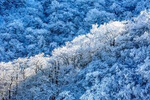 Frost Snow 5k