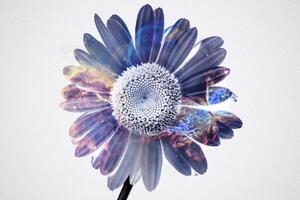 Gerbera Flower Fantasy