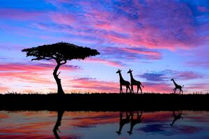 Giraffe Evening Silhouette 4k