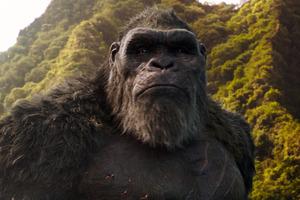 Godzilla Vs Kong Jungle