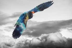 Golden Eagle Flying Galaxy Photoshop Wallpaper