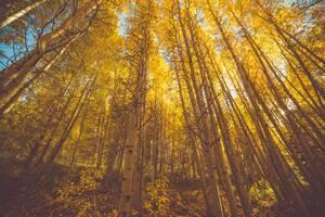 Golden Fall Season Forest 5k
