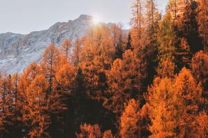 Golden Trees 5k