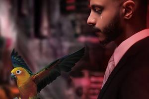 Goodbye My Bird Wallpaper