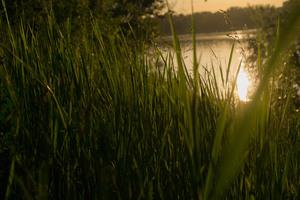 Grass 4k Sunset