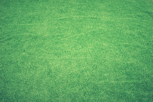 Grass Abstract Background 4k
