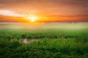 Grass Fog Sunrise Morning 4k Wallpaper