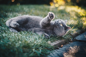 Gray Cat In Grass 4k Wallpaper