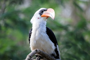Great Hornbill Bird Beak Wallpaper