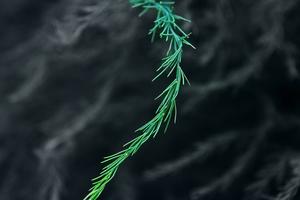 Green Bush Blur 5k