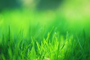 Green Grass Field Wallpaper
