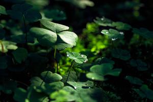 Green Leaf Macro Nature Grass Water Drop Wallpaper