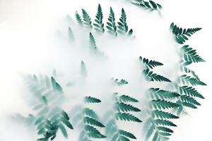 Green Leaf Plants Fog 4k