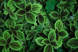 Green Leaves 5k