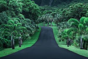 Green Road Nature 4k Wallpaper