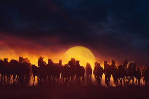 Group Of Horses Running Wallpaper