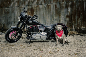 Harley Davidson And Dog Wallpaper