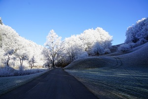 Hill Frost Road Trees 8k Wallpaper
