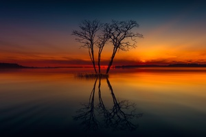 Horizon Lake Nature Reflection Sunset Tree