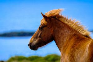 Horse In Depth Of Field 5k