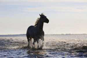 Horse Running On The Beach 4k 5k Wallpaper