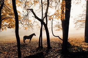Horse Sunlight Forest Photography 5k Wallpaper