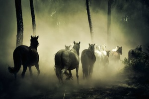 Horses Group Running 5k Wallpaper