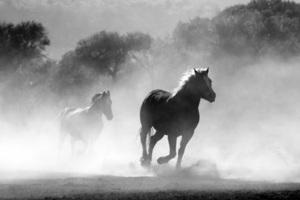 Horses Running Dust Monochrome 4k Wallpaper