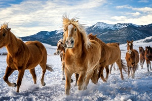 Horses Snow Running 4k Wallpaper