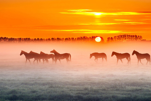 Horses Sunset 4k Wallpaper