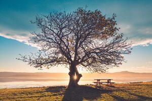 Huge Tree Sunbeams Bench 5k