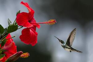 Hummingbird Macro Wallpaper