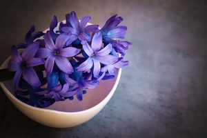 Hyacinth Flower Violet Flowers Wallpaper