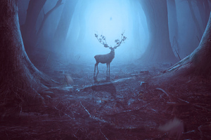 Into The Woods Reindeer 4k